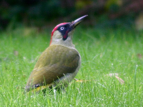 The Woodpecker Story