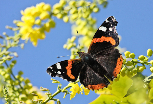 To See A Full List Of The Butterflies In The Garden Please Go To Our